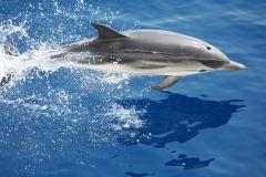 Gênova: excursão guiada para observação de baleias
