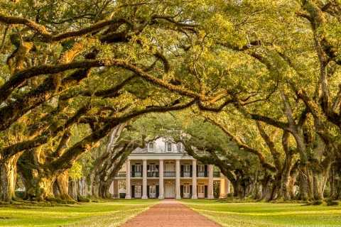 New Orleans: Oak Alley Plantation & Airboat Swamp Combo