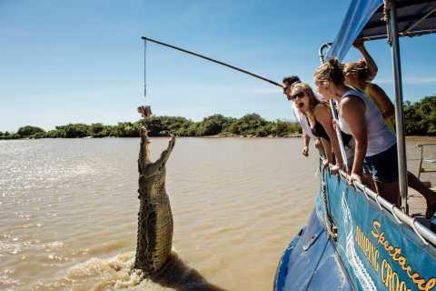 Darwin: Hyppy krokotiiliristeily
