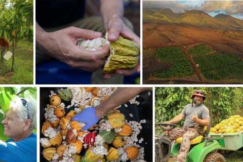 Lahaina: 1.5-Hour Cacao Farm Tour with Chocolate Tasting
