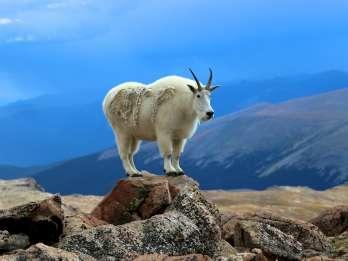 Denver: Mount Evans und Red Rocks Tour
