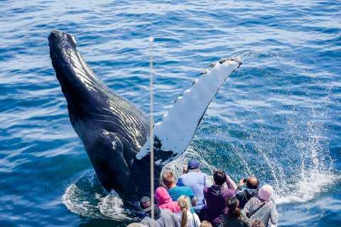 Boston: Whale Watching Catamaran Cruise