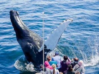 Boston: Whale Watching Katamaran-Bootsfahrt