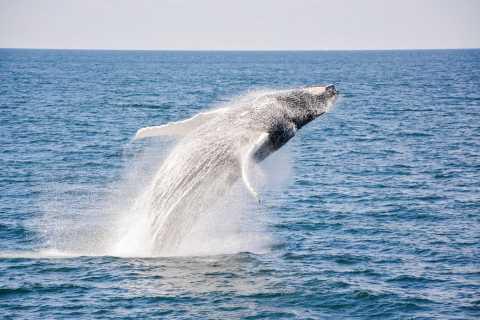 Boston: crucero en catamarán con avistamiento de ballenas