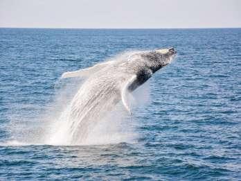 Boston: Whale Watching Katamaran-Tour