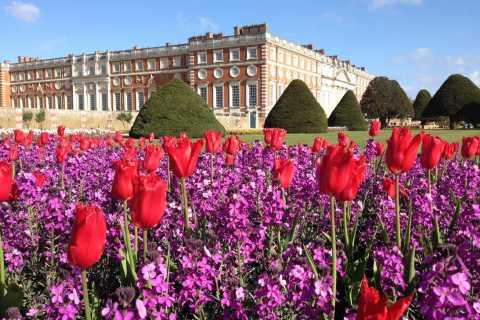 Fra London: Entrébillet til Hampton Court Palace inkl. haven