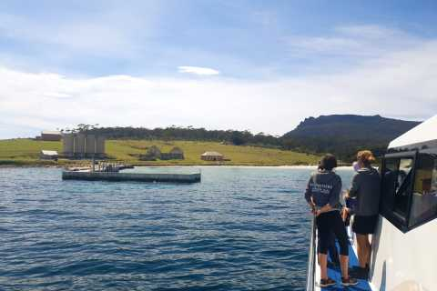 From Hobart: Full-Day Tour of Maria Island National Park