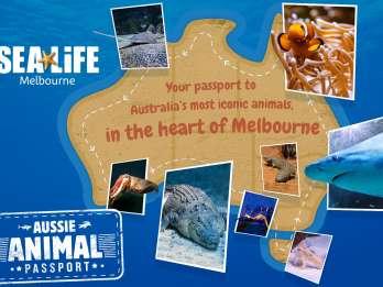 Melbourne: Ticket für das SEA LIFE Aquarium