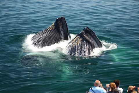 Бостон: наблюдение за китами с катамарана