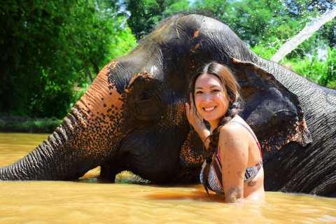 Phuket: Elephant Save & Care Program Small-Group Tour