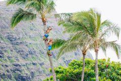 Oahu: Ka Moana Luau no Sea Life Park com jantar e show