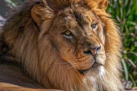 Зоопарк Феникса: общий входной билет на один день