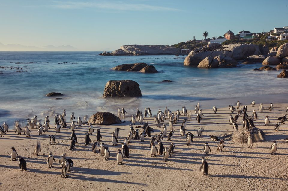 Całodniowa wycieczka na plażę pingwinów i do Przylądka Dobrej Nadziei