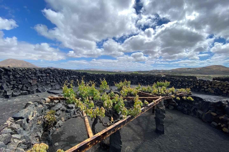 Lanzarote: Weintour und Verkostung unter dem Vulkan