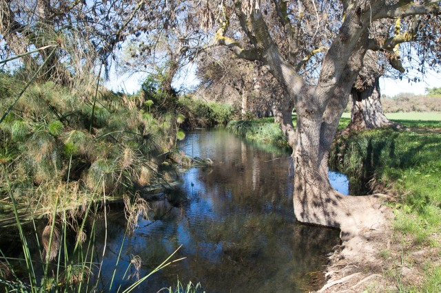 Syracuse: begeleide trektocht door het natuurreservaat Ciane River
