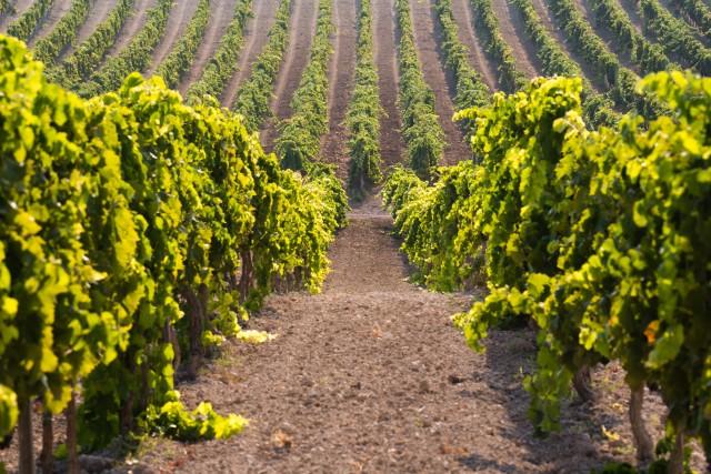 Val di Noto: proeverij van wijn en lokale producten