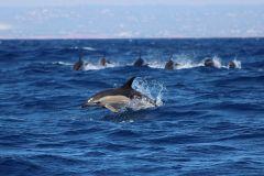 Lagos: Tour de observação de golfinhos com biólogo marinho a bordo