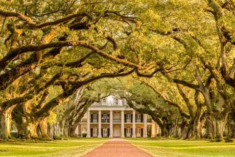 From New Orleans: Oak Alley Plantation Tour