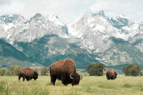 Grand Teton National Park: 4-Hour Wildlife Safari Adventure