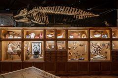 Houston: Ingresso para o Museu de Ciências Naturais