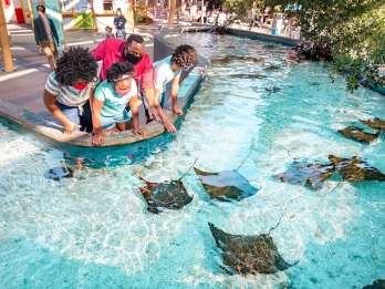 Aquarium of the Pacific: Ticket mit Einlass ohne Anstehen