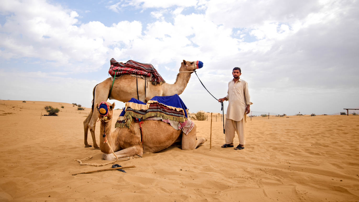 Ride camels and horses