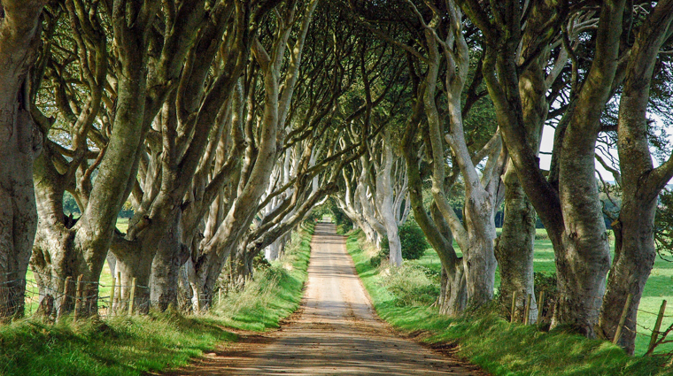 The Dark Hedges on the King's Road