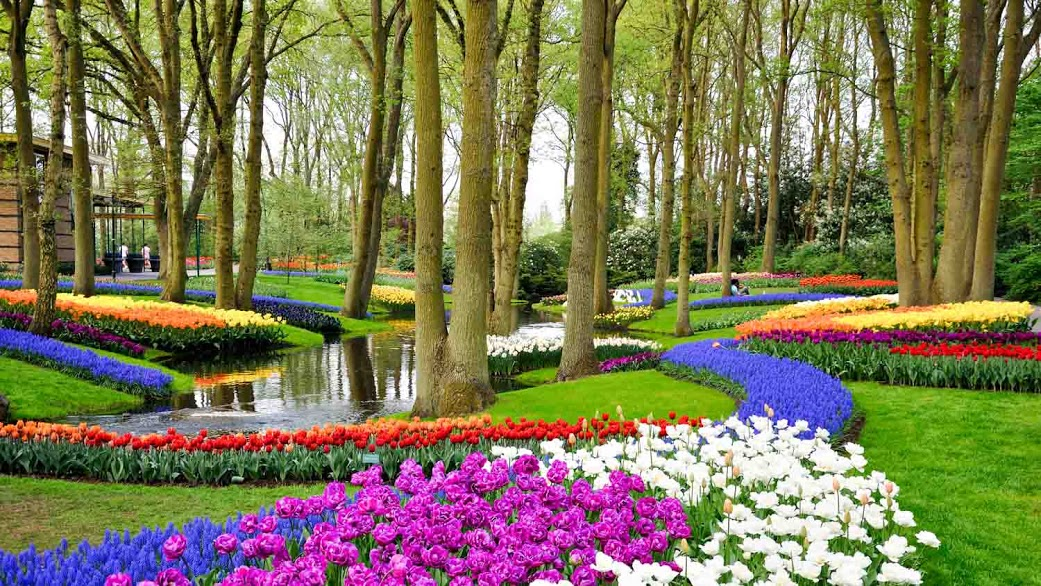 Keukenhof Gardens Netherlands Book Tickets Tours