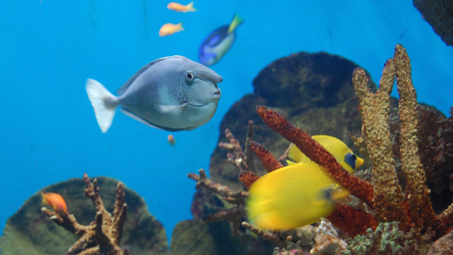 Aquarium Barcelona Related Keywords & Suggestions - Aquarium Barcelona ...