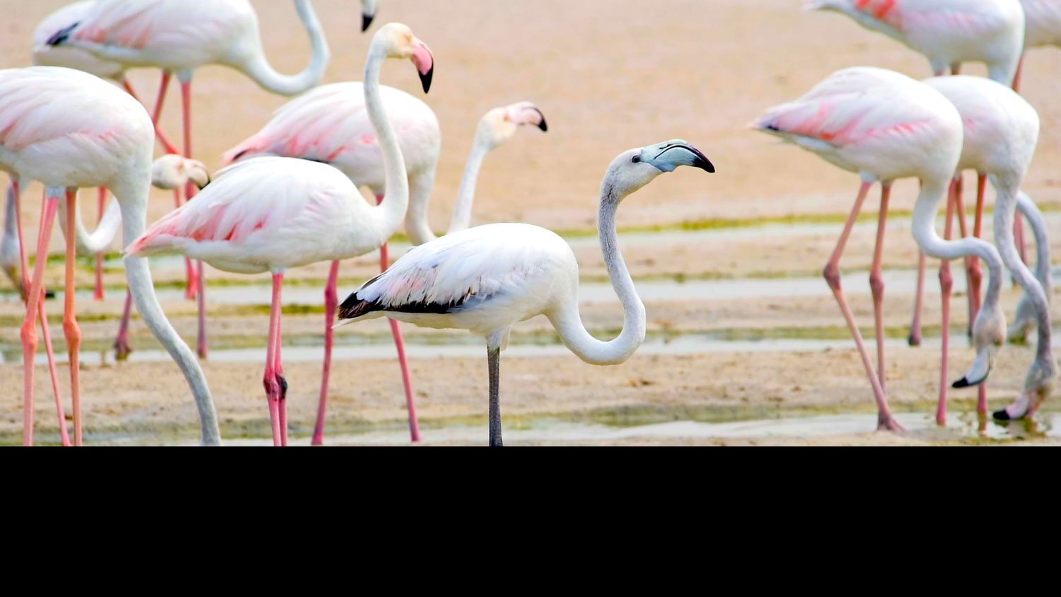 Rhas Al Khor Wildlife Sanctuary